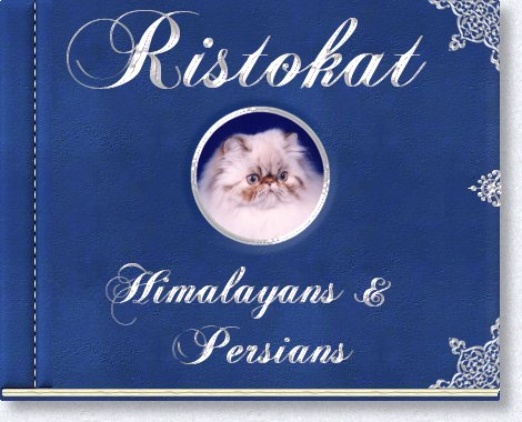 Welcome to Ristokat Himalayans and Persians